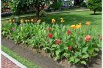 cara merancang bunga tasbih canna indica berkelompok linier.