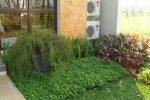 Taman minimalis, jenis tanaman tidak lebih dari 10 jenis antara lain; kacang hias, Dracaena sp, dan Iris.