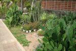 Taman kaktus, cara menyiram taman kaktus dan sukulen.