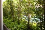 Deretan pohon dapat menghalangi angin dan pemandangan yang jelek.