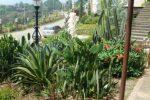 tanaman kaktus.