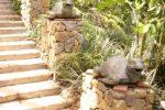 patung kura-kura di samping tangga.