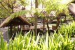 tanaman iris menjadi pembatas antar area tempat makan dan kolam atsmosphere cafe bandung.